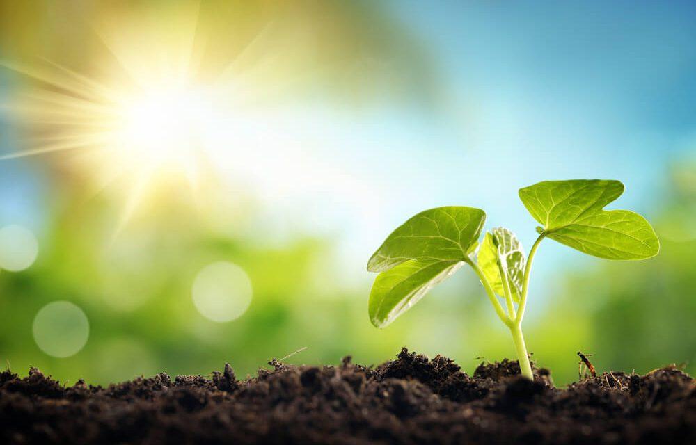 Μπορεί να επιζήσει ο άνθρωπος χωρίς την ύπαρξη φυτών;