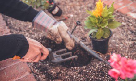 Πώς η κηπουρική μειώνει το άγχος και τη θλίψη