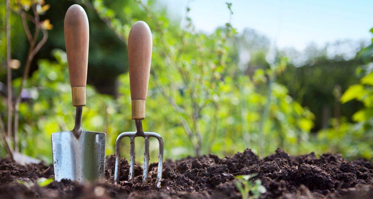 Πώς να ξεκινήσεις την κηπουρική: Τα top 4 βήματα για νέους κηπουρούς
