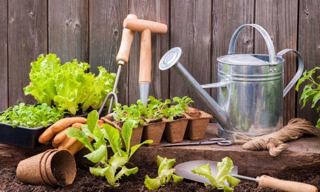 Πώς ξεκινάμε έναν λαχανόκηπο και σε ποιες ποσότητες