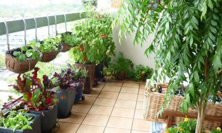 Πώς να φτιάξεις λαχανόκηπο στο μπαλκόνι – Οδηγίες & συμβουλές