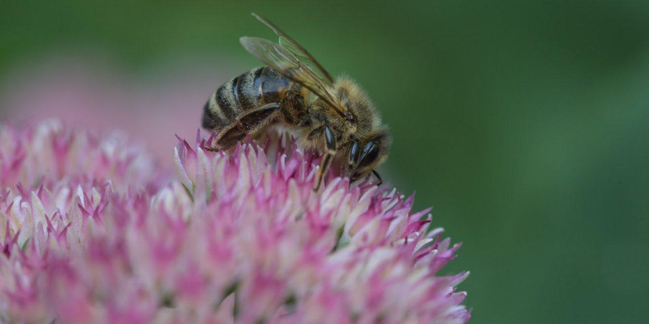 Ο δρόμος για τη μέλισσα στην Ελλάδα ανοίγει την άνοιξη του 2021
