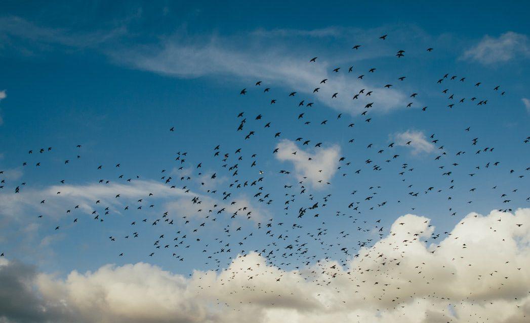 Σαν σήμερα 9 Μαΐου: Παγκόσμια Ημέρα Αποδημητικών Πτηνών