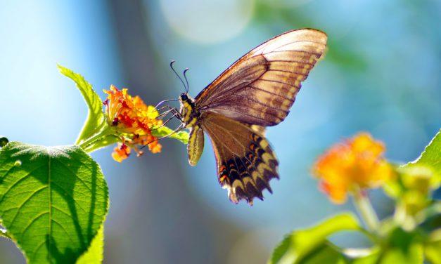 7 tips να προσελκύσεις πεταλούδες στον κήπο σου