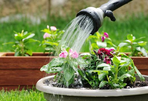 Μυστικά για το σωστό πότισμα των φυτών στις γλάστρες μας