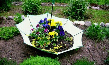 Η τέχνη του κήπου: Ιδέες για να βάλεις προσωπικότητα στον κήπο σου