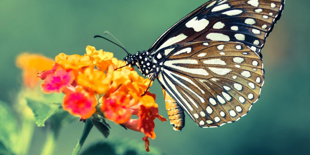 12 έντομα και ζώα – μετεωρολόγοι που προβλέπουν τον καιρό