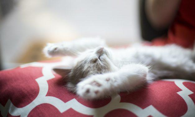Τρόποι να κοιμηθείς γρήγορα, σε 10, 60, 120 δευτερόλεπτα