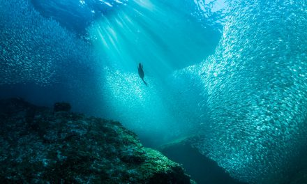 Σαν σήμερα 8 Ιουνίου: Παγκόσμια Ημέρα Ωκεανών