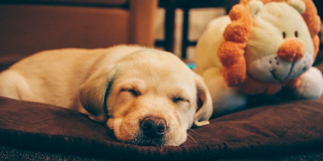 Κακός και καλός ύπνος: Πώς επηρεάζουν το σώμα και τον εγκέφαλο