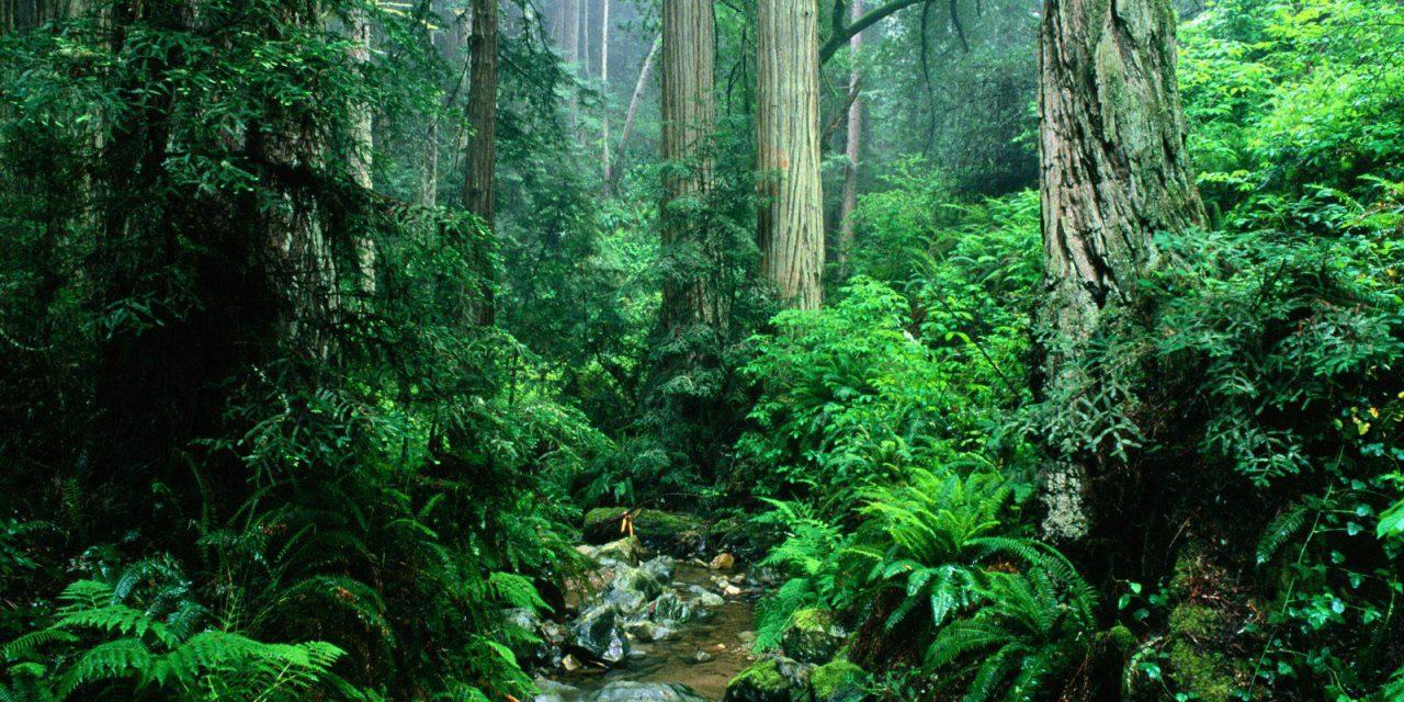 Σαν σήμερα 22 Ιουνίου: Παγκόσμια Ημέρα για τα Τροπικά Δάση