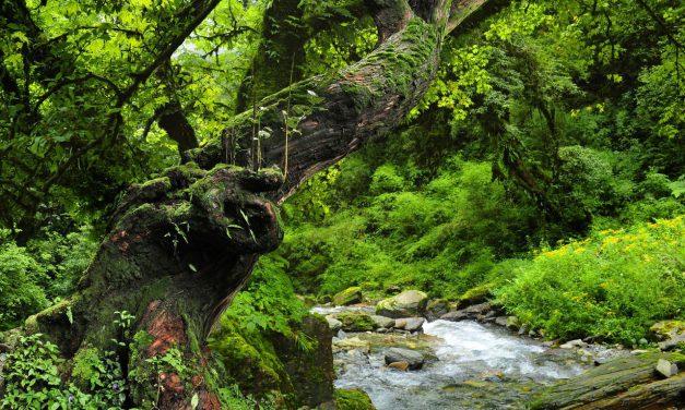 Τροπικά δάση: Γιατί είναι τόσο σημαντικά;