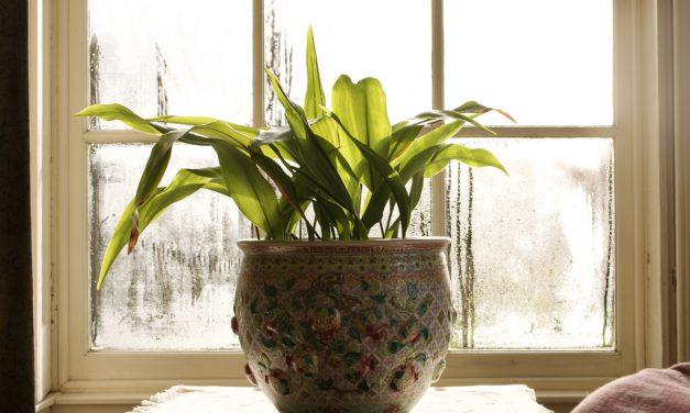 Πώς τα φυτά εσωτερικού χώρου καθαρίζουν τον αέρα