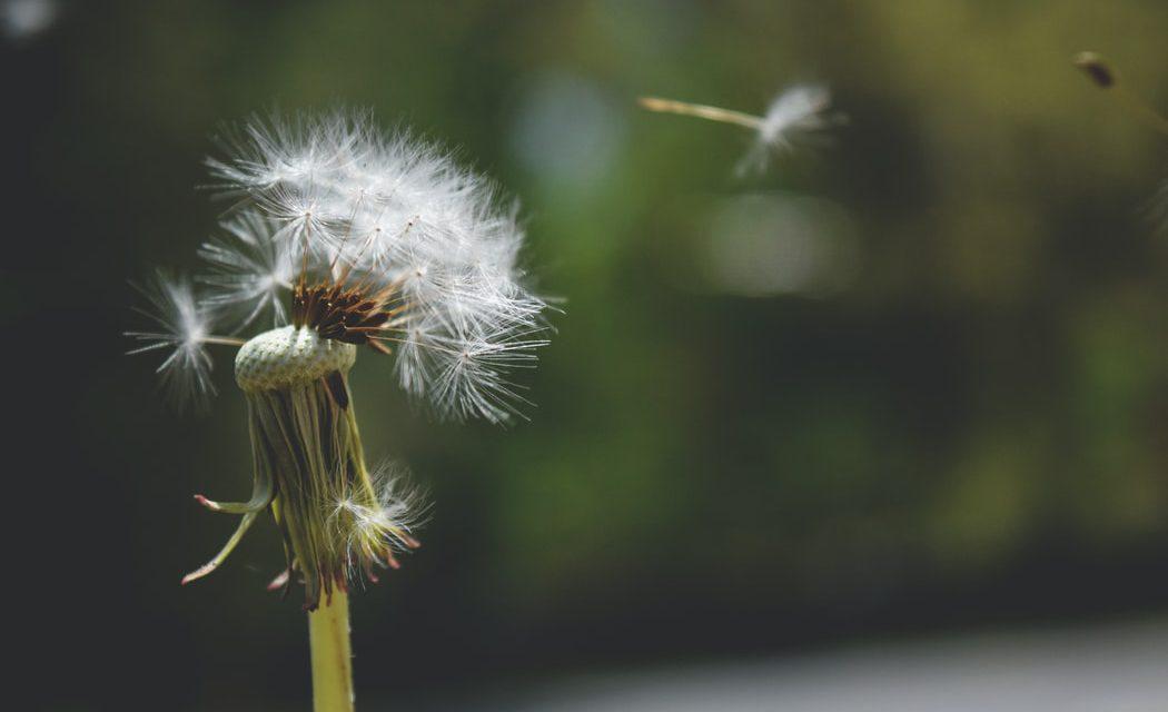 Έχεις εποχική αλλεργία; Δοκίμασε αυτά