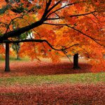 Γιατί το φθινόπωρο φέρνει μελαγχολία και άγχος; Πώς το εξηγούν οι ψυχολόγοι