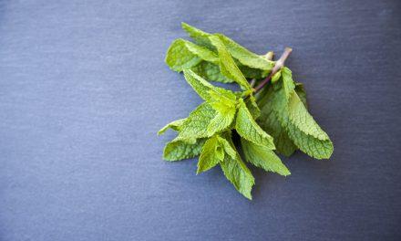 10 αρωματικά φυτά και βότανα για τον κήπο σου
